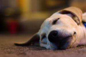 Kutya altatás blog